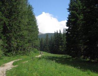 Rax-Alpok: Heukuppe(2007m) - túránk elején, egy szép fenyvesben