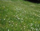 Schneeberg (2076m) - túránk elején fantasztikus virágos réteken haladunk