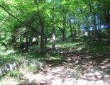 Schneeberg (2076m) - túránk elején szép erdei ösvényen is haladunk