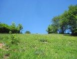 Schneeberg (2076m) - túránk elején fantasztikus virágos réteken haladunk.