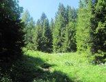 Schneeberg (2076m) - túránk egy nagyon szép erdőben folytatódik