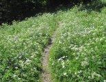 Schneeberg (2076m) - túránk során néhol gyönyörű virágos réteken haladunk