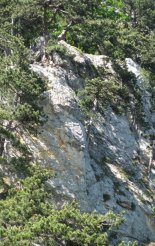 Hohe Wand: Gebirgsvereinssteig - túránk a távolban