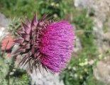 Hohe Wand: Gebirgsvereinssteig - gyönyörű virág a fennsíkon