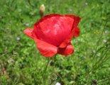 Hohe Wand: Wildenauersteig - fantasztikus virágok a fennsíkon