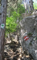Hohe Wand: Wildenauersteig - Springlessteig