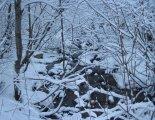Hótalpas túra: Alacsony-Tátra - Gyömbér-csúcs(2043m) - Túrautunk elején egy patak mellett haladunk