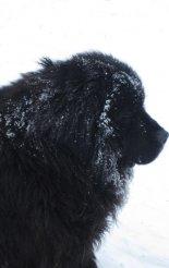 Hótalpas túra: Alacsony-Tátra - Gyömbér-csúcs - kutya a hegyen