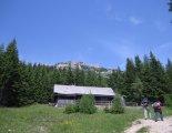 Rax-Alpok: Heukuppe (2007m) - túránk elején, egy szép fenyvesben