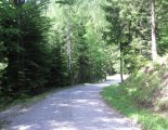 Rax-Alpok: Preinerwandsteig - túránk elején a fenyvesben