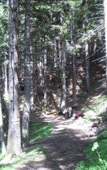 Rax-Alpok: Preinerwandsteig - a forrás után továbbra is a fenyvesben haladunk