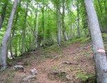 Kaiserschild klettersteig - túránk egy ideig a fenyvesben halad