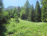 Schneeberg(2076m) - fantasztikus virágos réteken