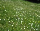 Schneeberg(2076m) - túránk gyönyörű alpesi, virágos réteken halad
