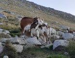 GR20 - magashegyi trekking