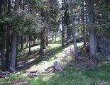 Semmering - Stuhleck(1782m) csúcstúra: gyönyörű alpesi erdő
