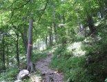 Csúcstúra - Schneealpe: Windberg(1903m) - útközben egy szép fenyvesben