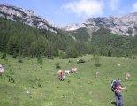 Csúcstúra: Rax-Alpok: Heukuppe(2007m) - utunk közben, alpesi legelőkön haladunk