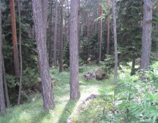 Hohe Wand: Gebirgsvereinssteig - túra a beszállásig